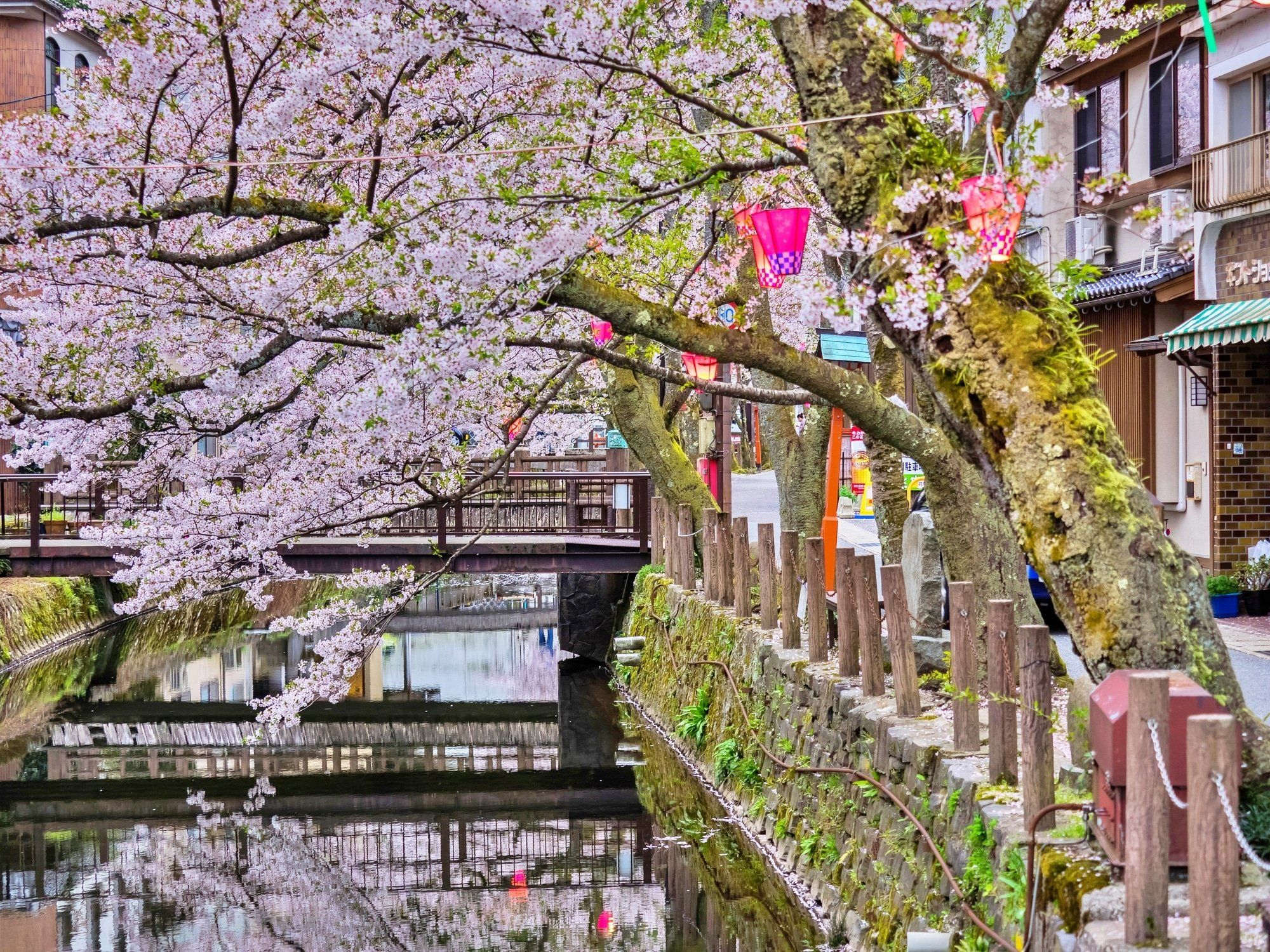 Cherry Blossoms In Hyogo 2020 14 Incredible Spots For Seasonal Blooms Matcha Japan Travel Web Magazine In The Sp Matcha Japan Japan Travel The Incredibles