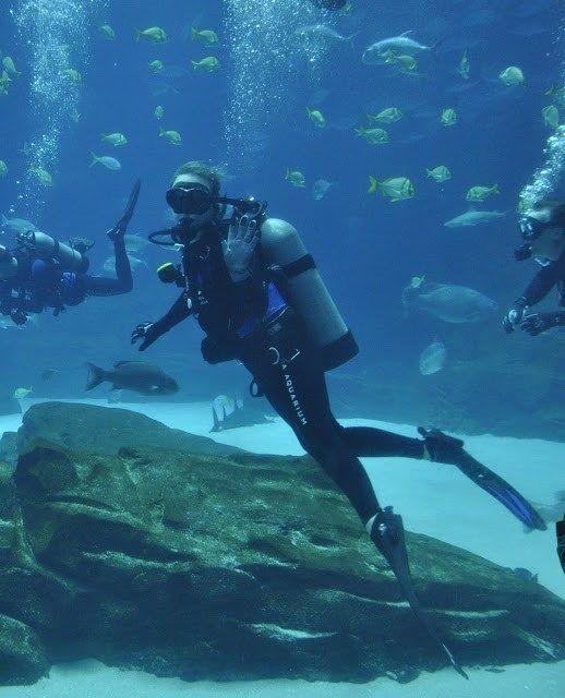 Scuba Diving At The Georgia Aquarium Caroline In The City Travel Blog Georgia Aquarium Scuba Diving City Travel