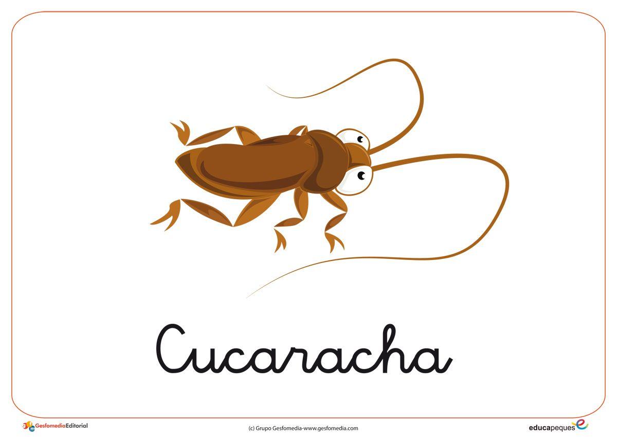 Fichas de Animales. Descubre estas fichas de insectos para trabajar ...