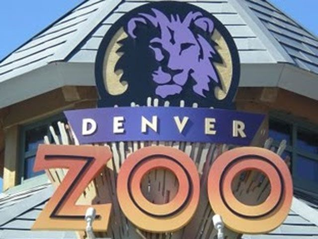 Loved Tony The Rhino Born At The Zoo Bounced After His Mom Like A Disney Character Denver Zoo Denver Travel Zoo Coupons