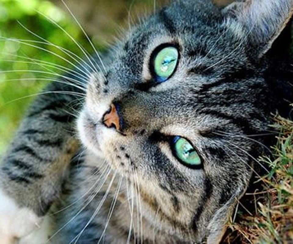 Pin By Becks S On Cats Paws And Whiskers Warrior Cats Tabby