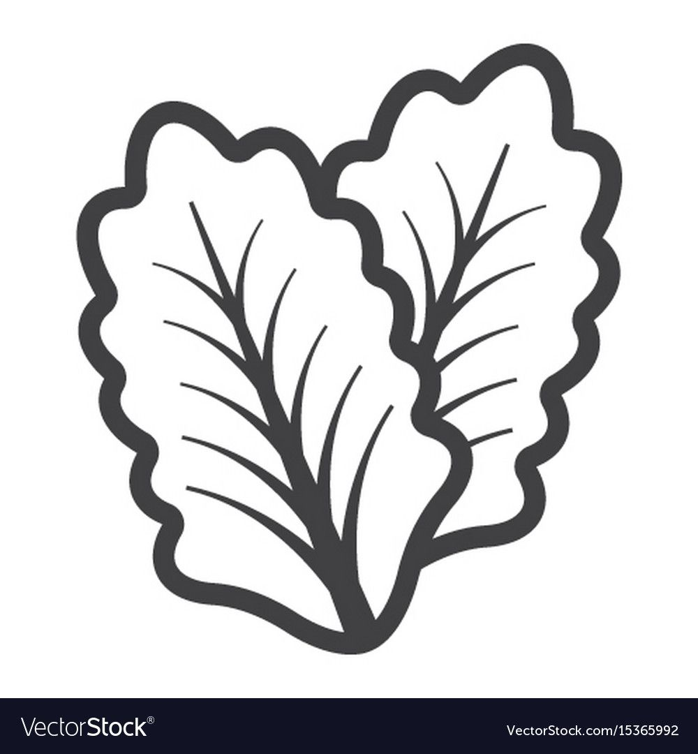 Lettuce Line Icon Vegetable And Salad Leaf Vector Image On Line