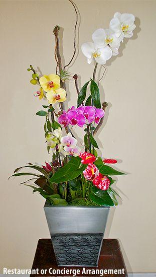 Live Orchid Arrangement Orchid Heaven Orchid