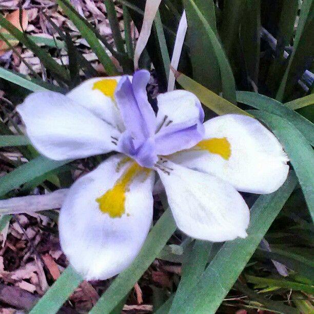 Flower along the Quad, Woodbury. University ,#eavig, #Occupy Health, #Sept. 30, #UCNH. Chamber . - @mgilstrap19- #webstagram