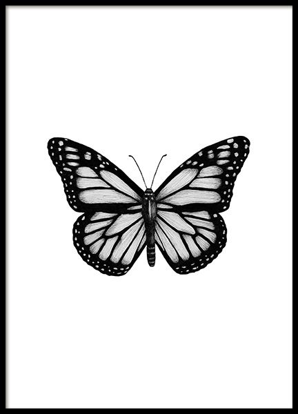 Photo of Butterfly Drawing Poster