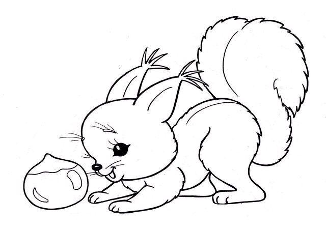 mókusok  malvorlagen tiere malvorlagen und eichhörnchen