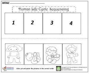 Human Life Cycle Sequencing Worksheet
