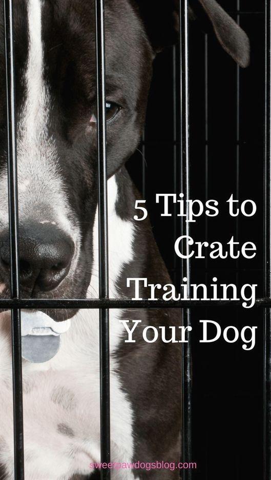 Dog Training Kentucky Dog Training Mata Dog Training 80234 Dog