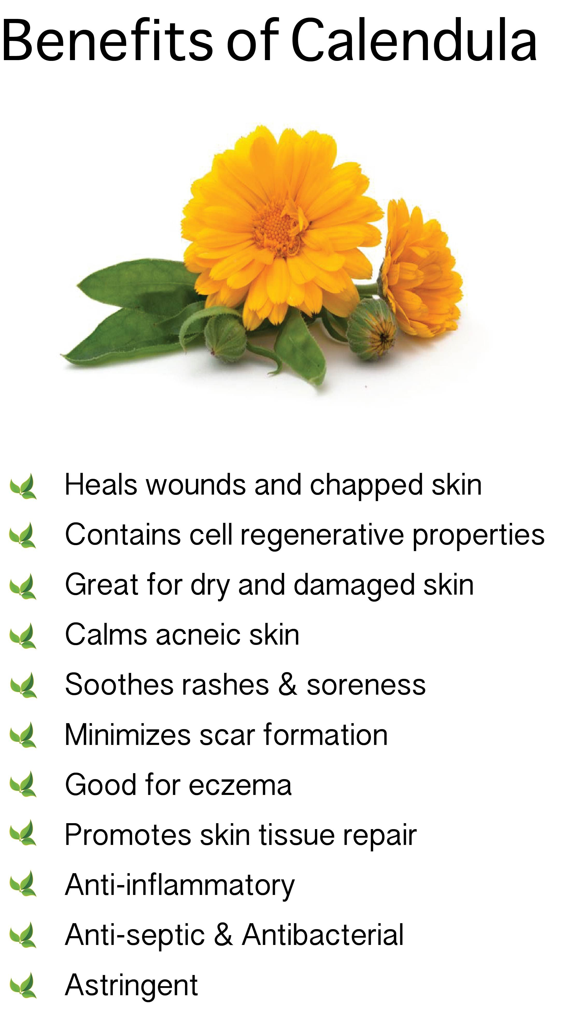 Benefits of Calendula. Also known as Marigold Saiva