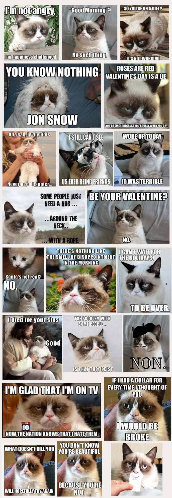 cat adoptions tampa