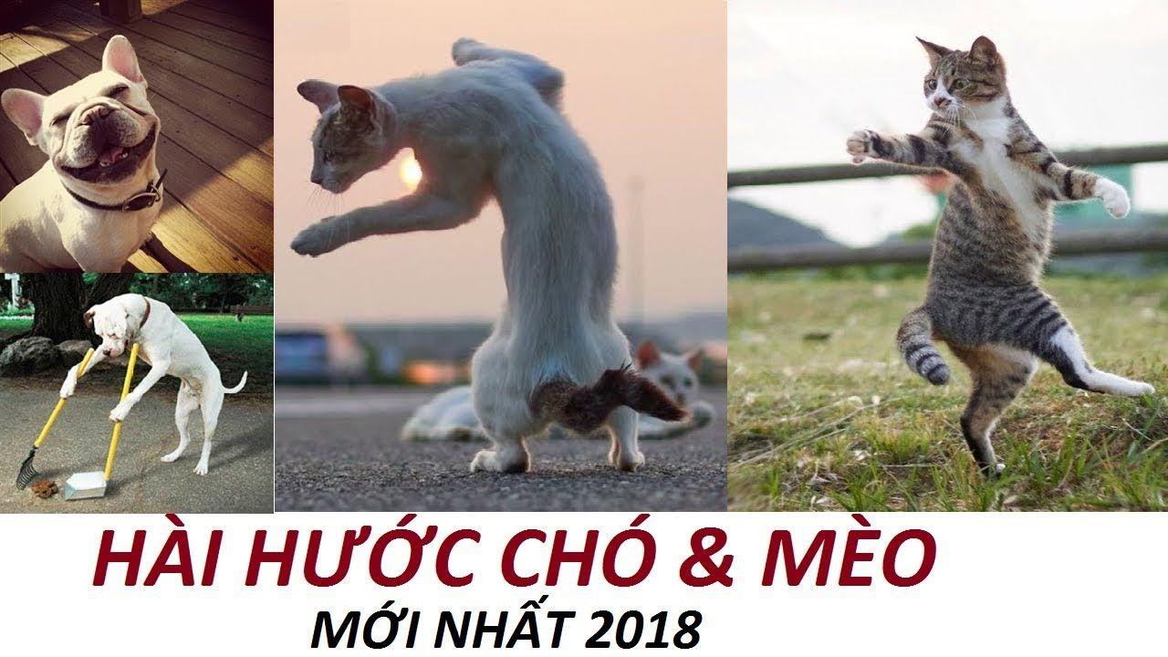 Chó Mèo Hài Hước Xem 100 Lần Vẫn Cười Té Ghế
