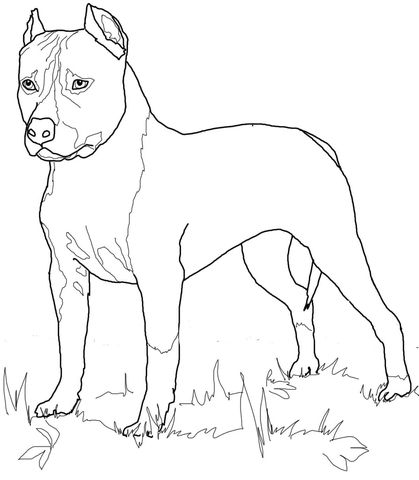 American Staffordshire Terrier Coloring Page Dog Coloring Page