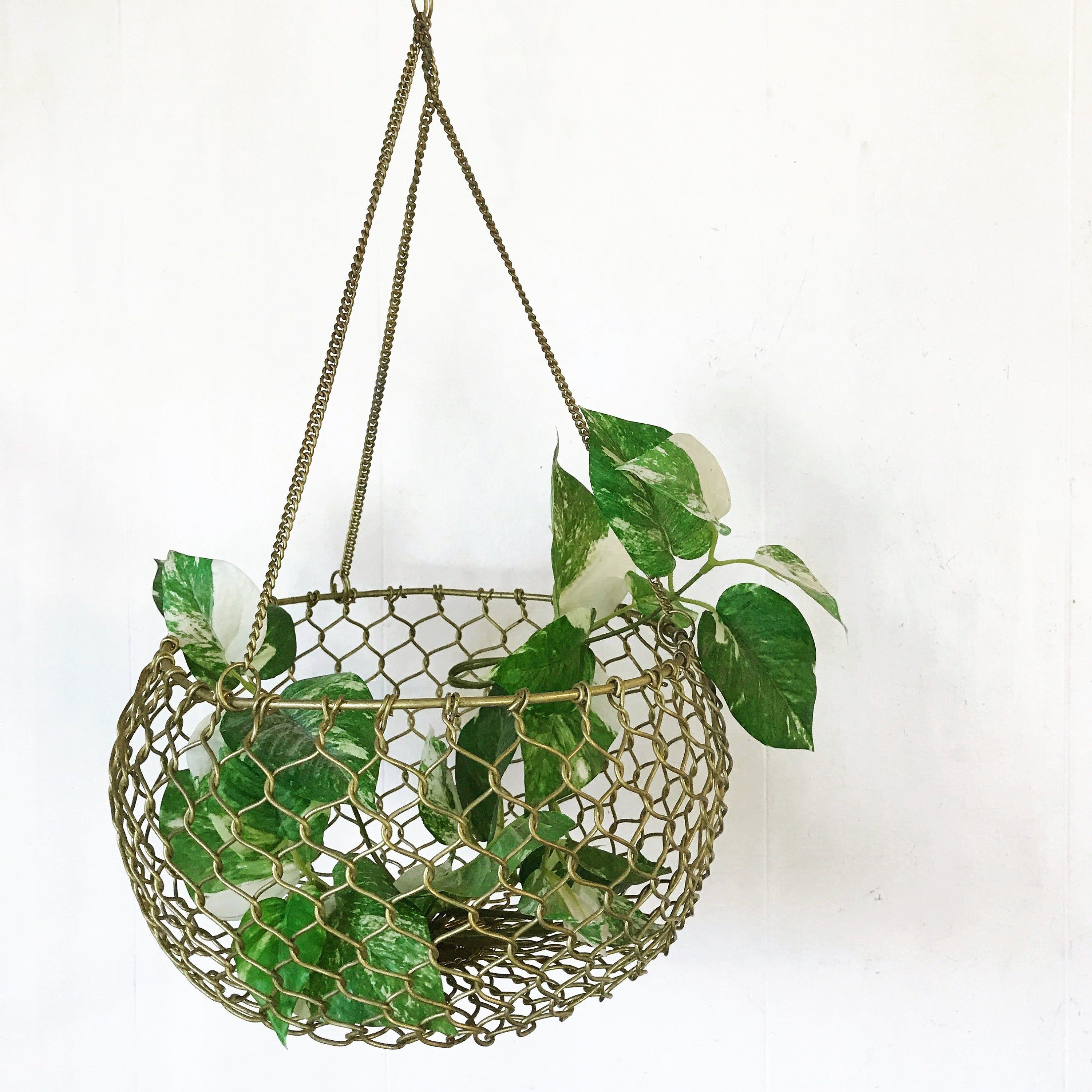 Make This Super Easy Diy Hanging Plant Wall Wall Plant Hanger Plant Wall Diy Hanging Plant Wall