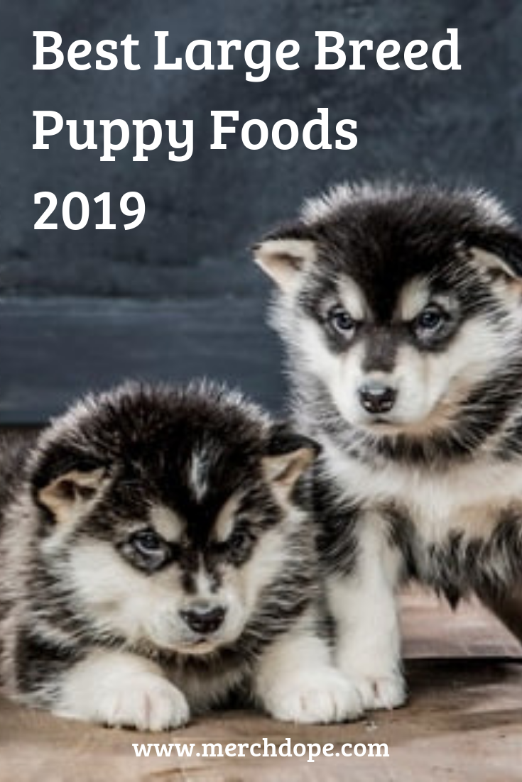 Best Large Breed Puppy Foods 2020 Large breed puppy