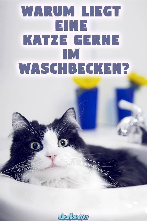 Warum Liegt Eine Katze Im Waschbecken Katzen Katzen Erziehen Katzen Verhalten