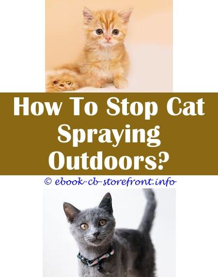8 Top Cool Tips Home Remedy Spray To Keep Cats From Scratching