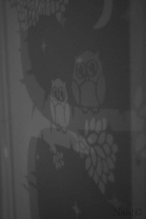 Owl shadow. Owl cut out of paper, and then plating with shadow. #owlcutout #paperart