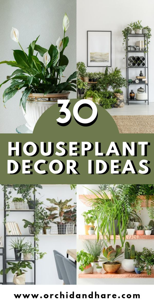 30 Indoor Plant Decor Ideas is part of Plant decor indoor, House plants indoor, Houseplants decor, House plants decor, Indoor plants, Bathroom plants decor - 30 original Indoor Plant Decor Ideas  Find unique and fun ways to display your houseplant collection in your home    just like interior designers do!