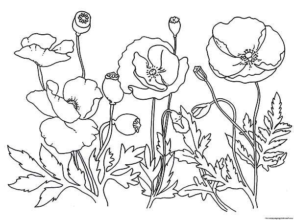 Poppy Garden Of Poppy Coloring Page Poppy Coloring Page