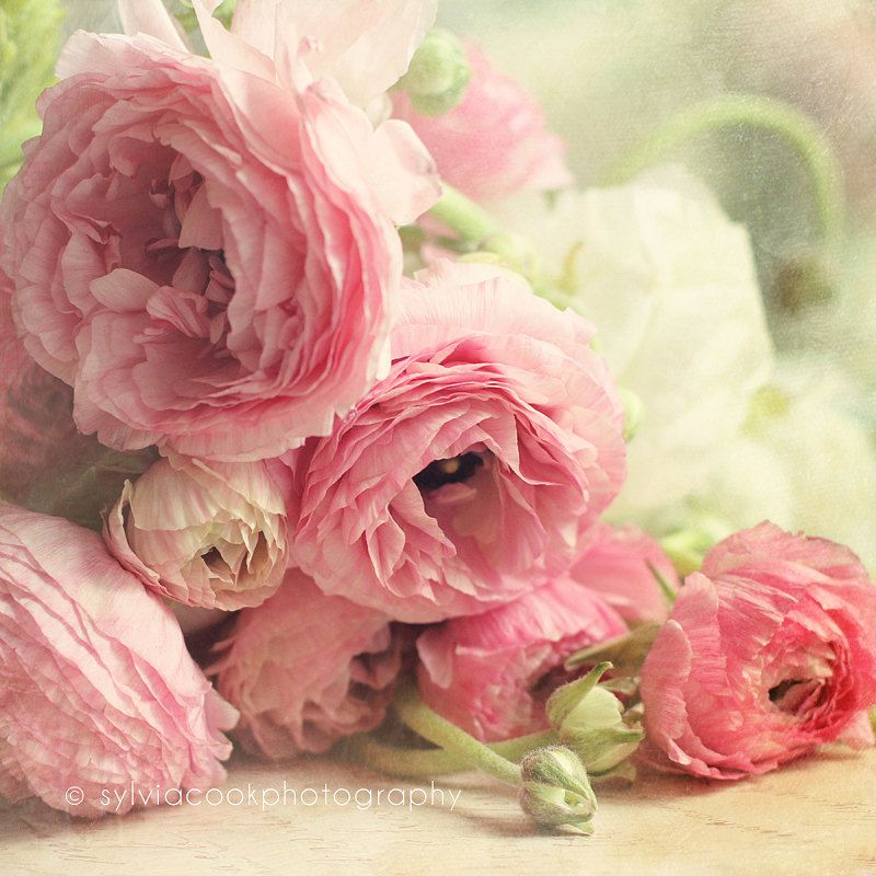 Shabby Chic Home Decor The First Bouquet Pink Ranunculus Fine Art Print Pastel Photograph Fl Photography