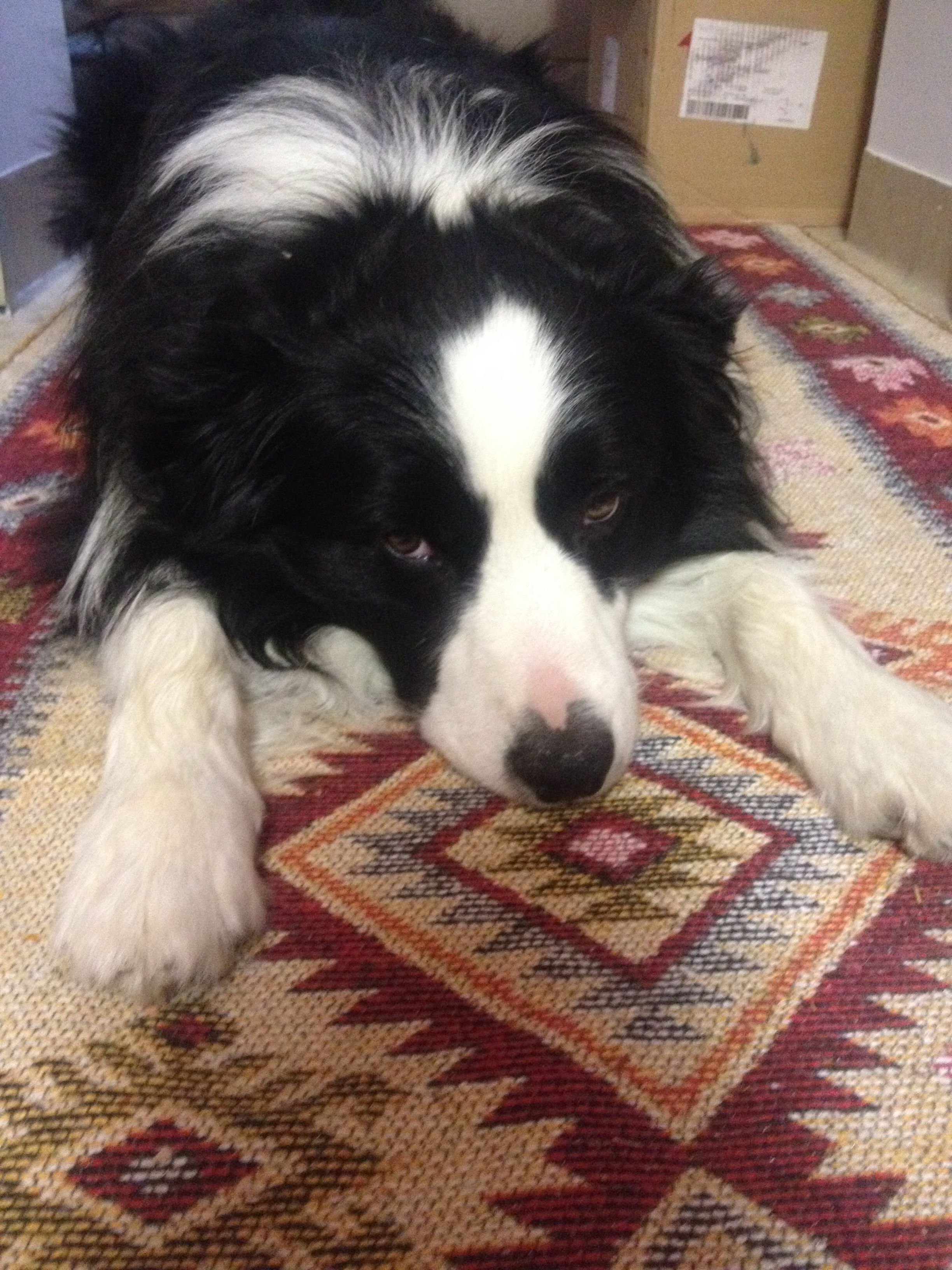 Pin By Jenny Claspill On Luv Everything Border Collie Border