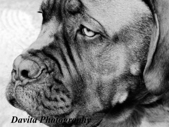 Geno 5x7 Fine Art Photographic Print  CURRENTLY IN STOCK by Davita, $15.00
