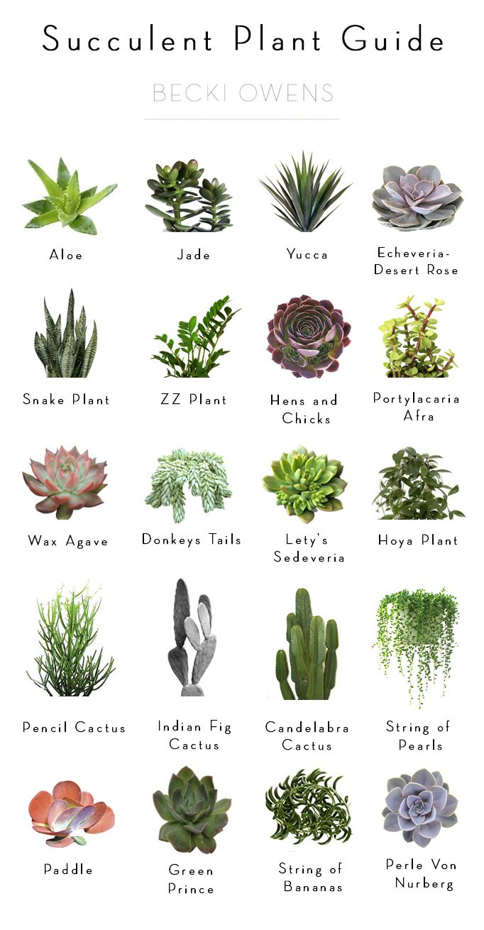 Succulent Plant Identification Chart Pictures to Pin on ...
