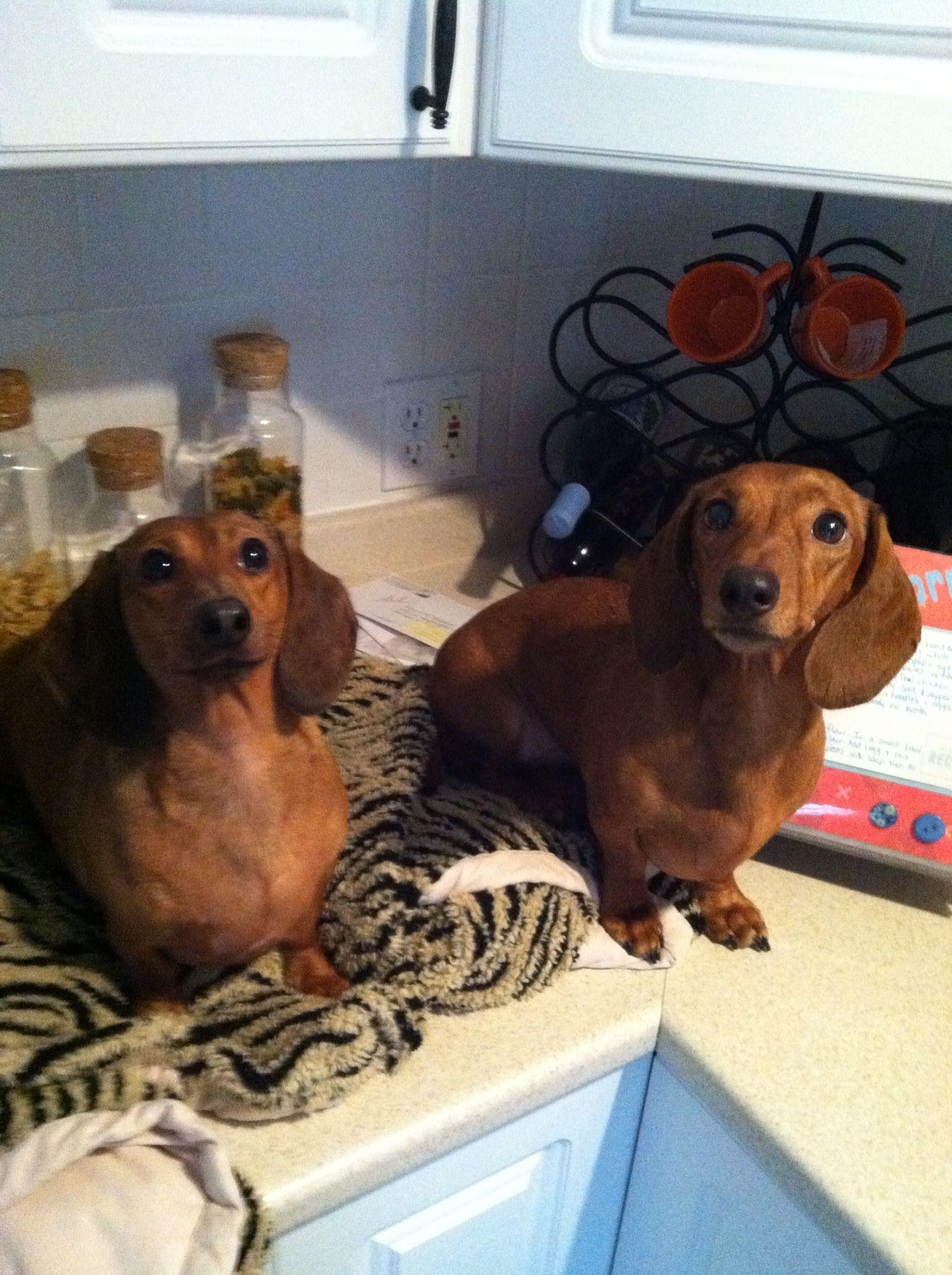 The girls. Zoie & Lucy