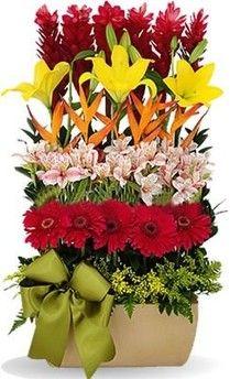 Arreglo De Acapulcos Lilys Alstroemerias Gerberas En Una