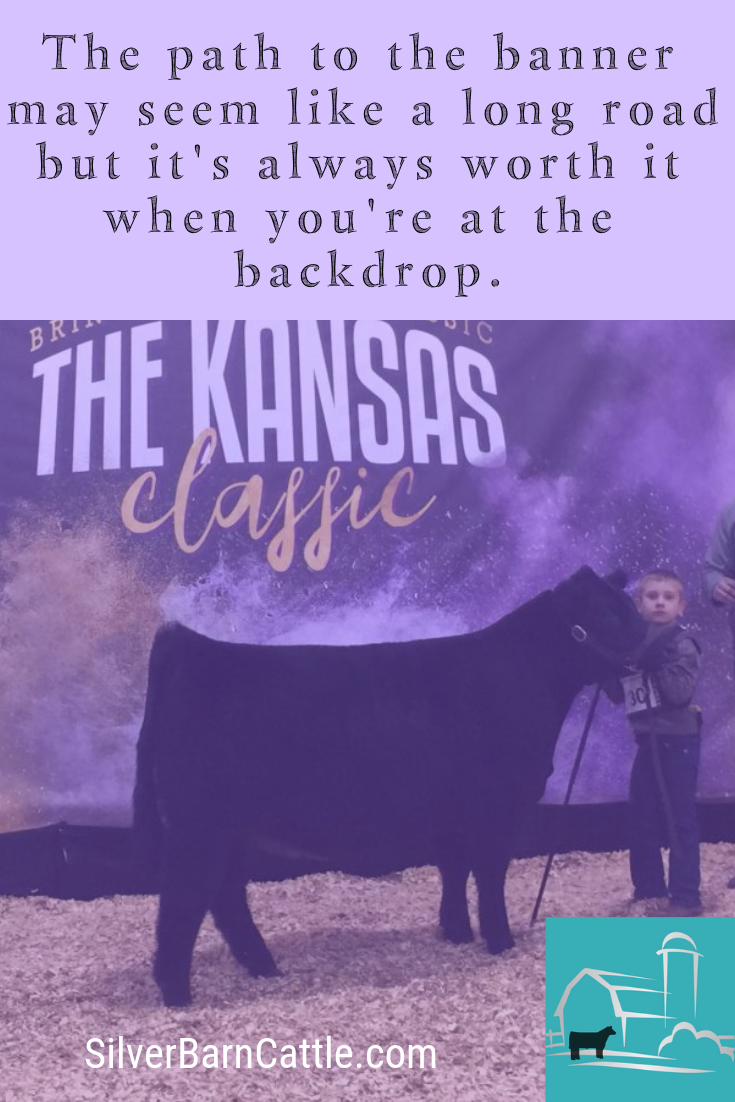 Let Silver Barn Cattle Guide You And Your Show Cattle On Your Path To The Banner Show Cattle Cattle Banner