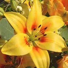 flores varias - Buscar con Google