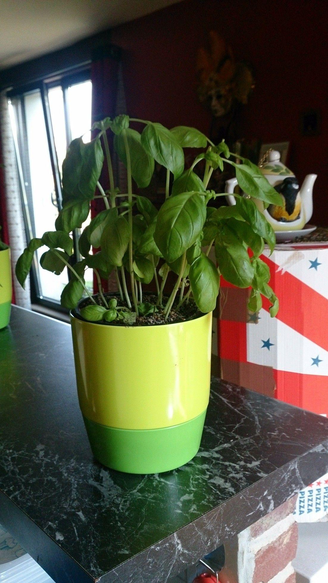 Pot à herbes aromatiques en deux parties le dessous pour l