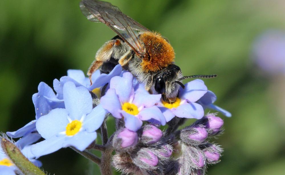 """Machen Sie mit beim großen Wettbewerb """"Deutschland summt"""": Dokumentieren Sie Ihr gemeinschaftliches Bienenschutz-Projekt und gewinnen Sie mit etwas Glück einen attraktiven Preis."""