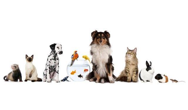 TOUCH esta imagem: Animais de estimação-Português e inglês by rosa