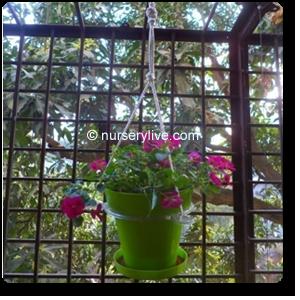 Buy hanging baskets pots online at Nursery Live | luv the planters on gardens in srinagar, gardens in tokyo, gardens in india, gardens in lahore, gardens in bangalore, gardens in nairobi, gardens in kashmir, gardens in seoul, gardens in beijing, gardens in bangkok,
