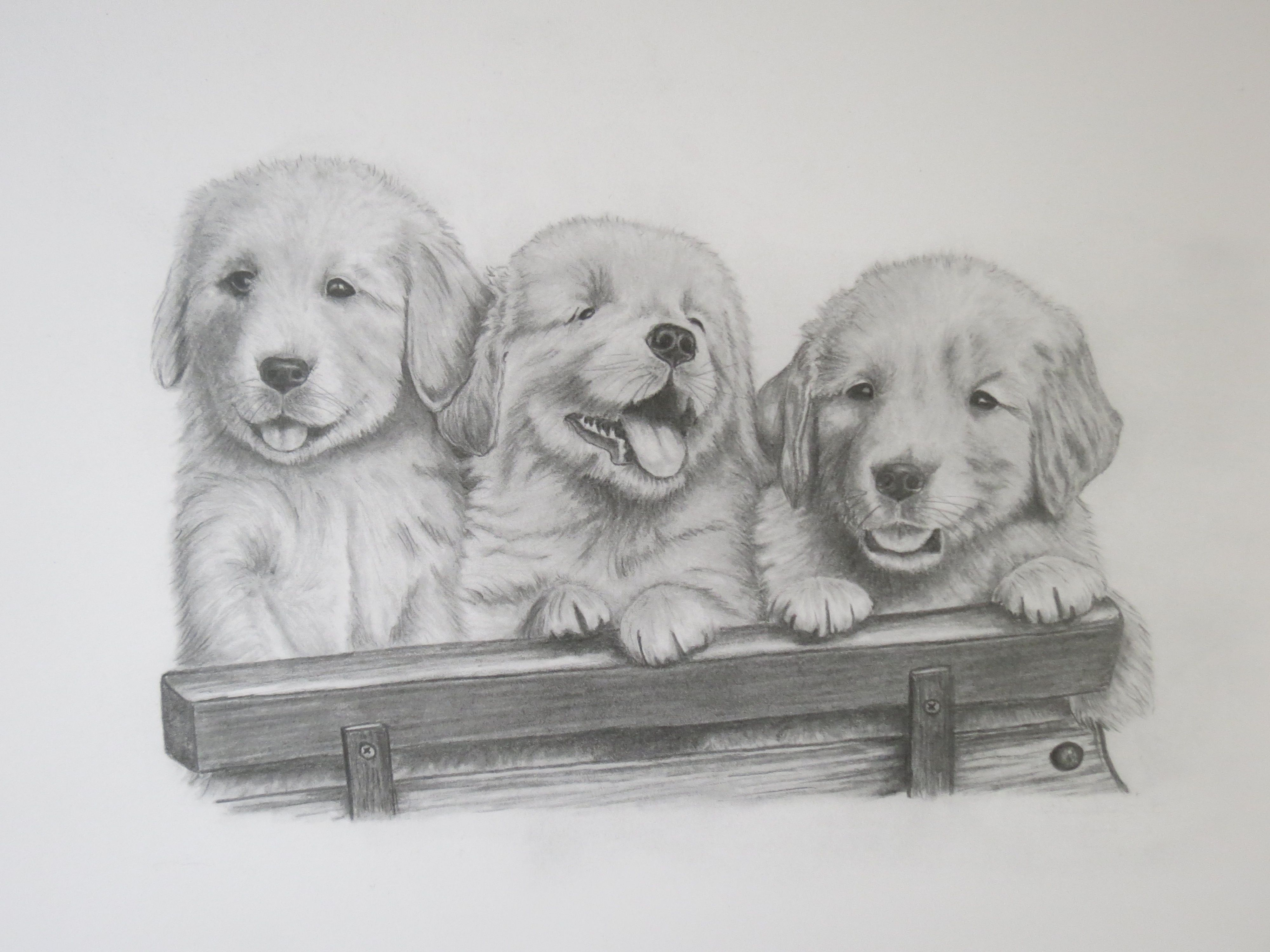 Golden Retriever Puppies Pencil Drawing For Sale On My Etsy Shop
