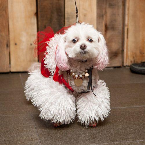 Lookbook PuppyCon — DOG & CO. Dogs