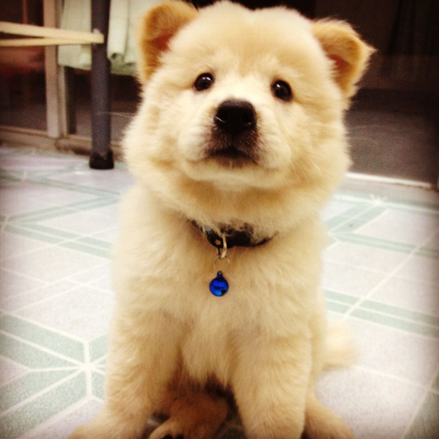 Beautiful Mixed Chubby Adorable Dog - dfad9e11d9157fc4ef9c57dcf5c9e9bb  Picture_68753  .jpg