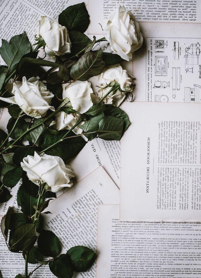 1001 + images pour un fond d'écran fleur magique | Fond ...