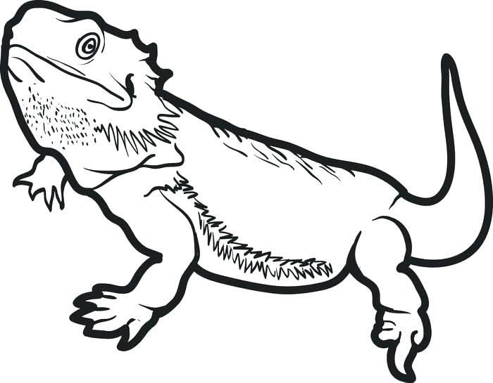 bearded dragon coloring page pages