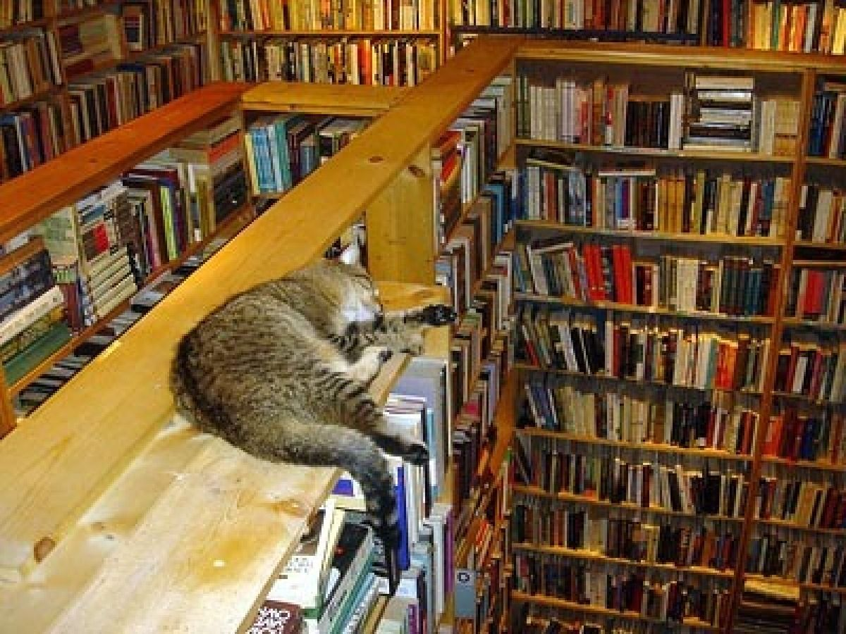 PHOTOS 27 Cats In Unexpected Places