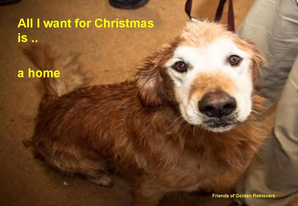 Pet holiday by Anne James on please adopt me Golden