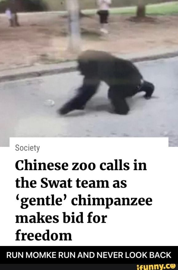 Meme memes QlDpD7Js6: 32 comments — iFunny Chinese zoo calls in the Swat team as 'gentle' chimpanzee makes bid for freedom RUN MOMKE RUN AND NEVER LOOK BACK - RUN MOMKE RUN AND NEVER LOOK BACK – popular memes on the site
