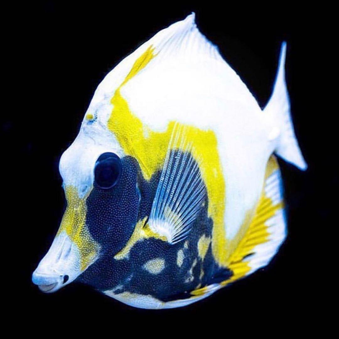 Reef Tank In 2020 Saltwater Fish Tanks Reef Tank Salt Water Fish