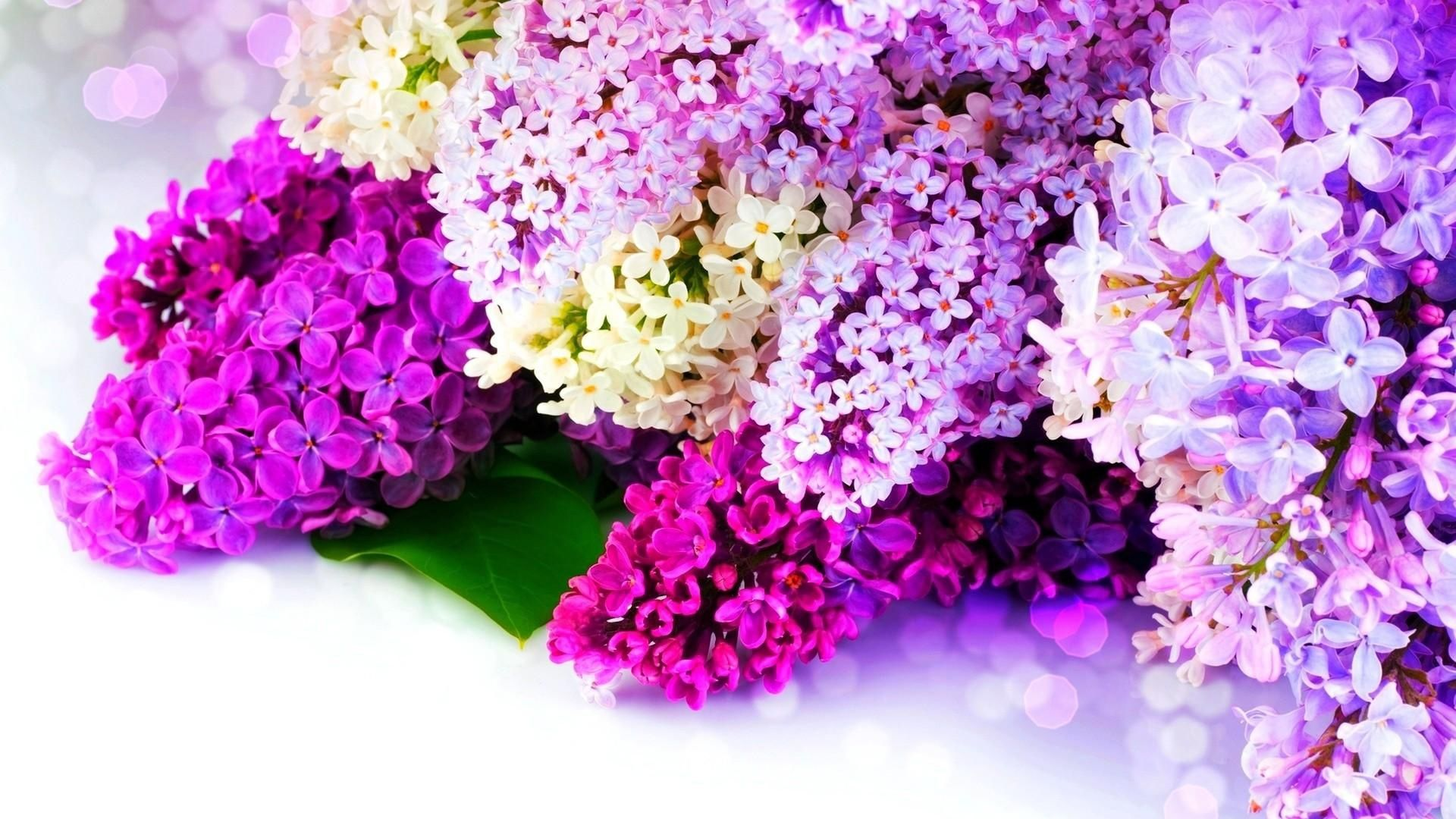 Lilac Flowers Only In The Our Store Fleur Flower Boutique Lilac