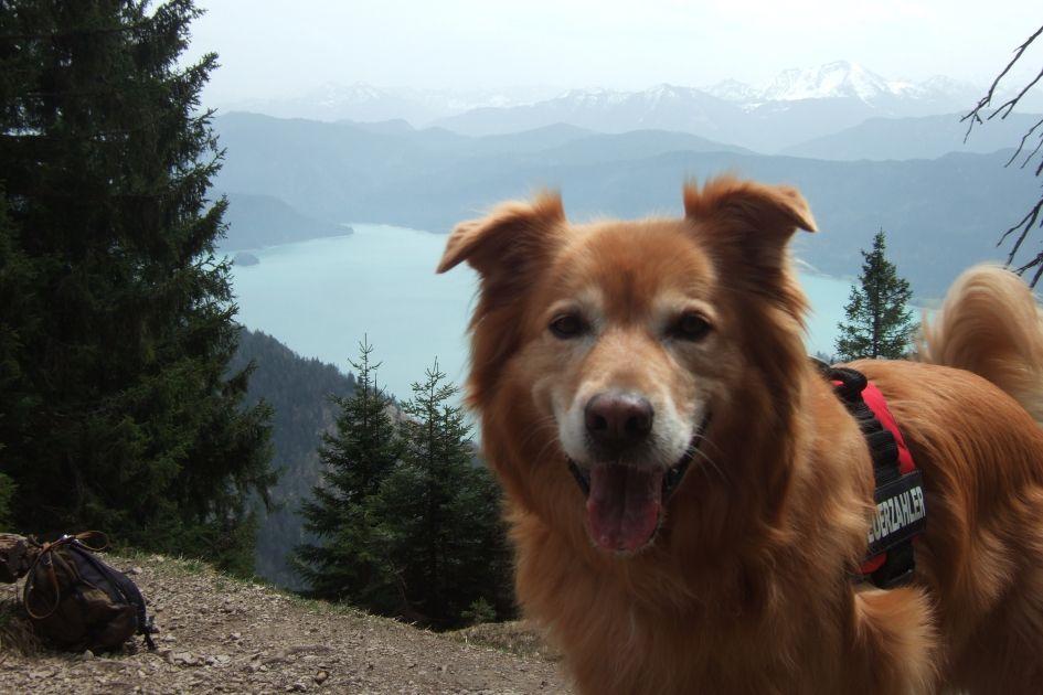 Dogs Worldwide Schweiz Wufflog In 2020 Urlaub Mit Hund American Pitbull Staffordshire Terrier