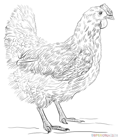 How to draw a hen step by step