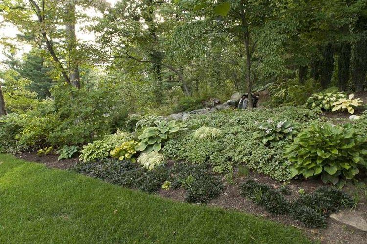 Dekoration Hangbepflanzung Planen Welche Bodendecker Eignen Sich