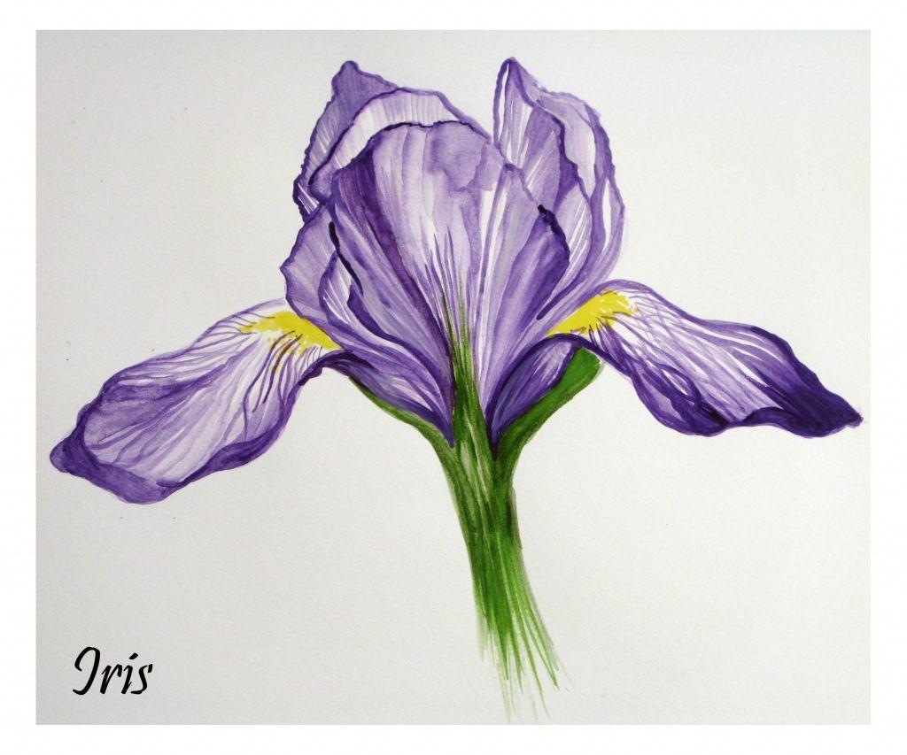Beautiful iris drawing   Blumenzeichnung, Blumentattoos ...