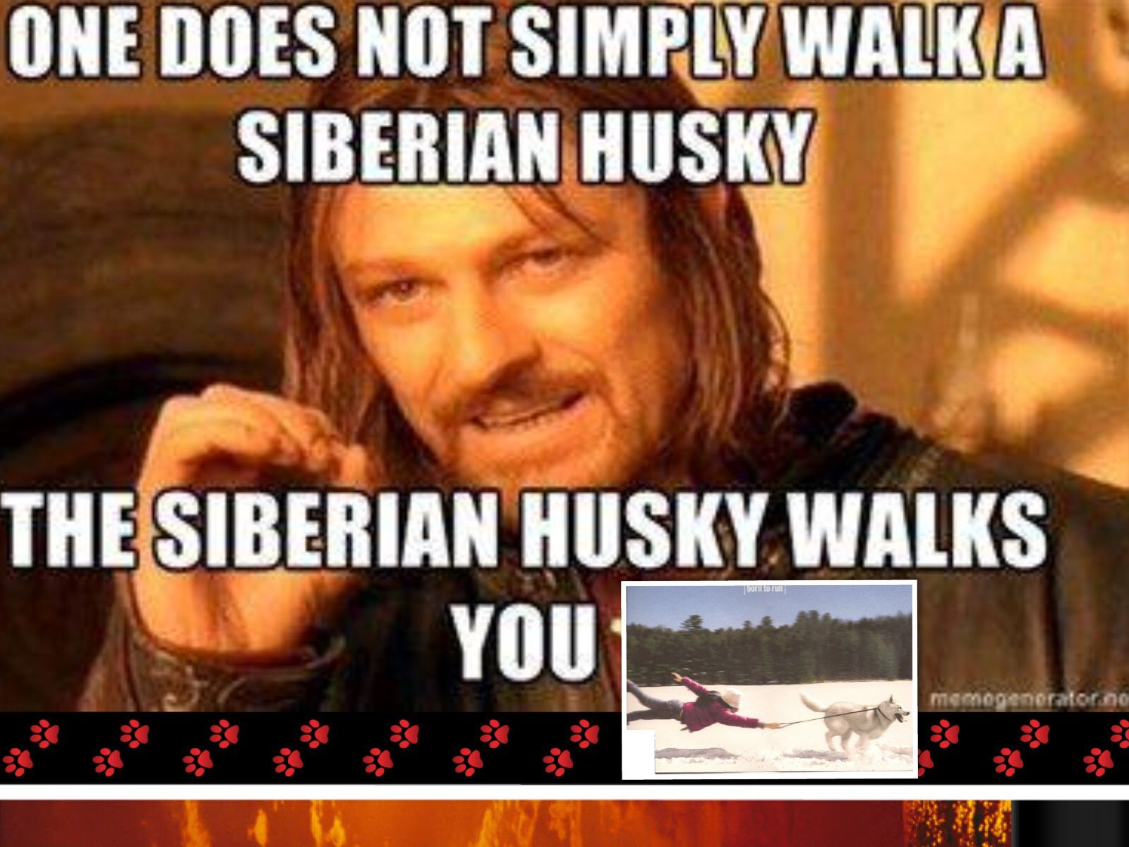 How many of us have been there???? Husky funny, One does